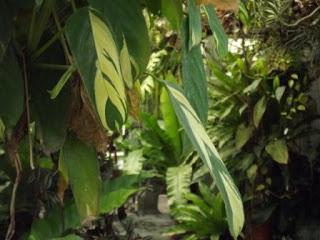 el lenguaje de las plantas